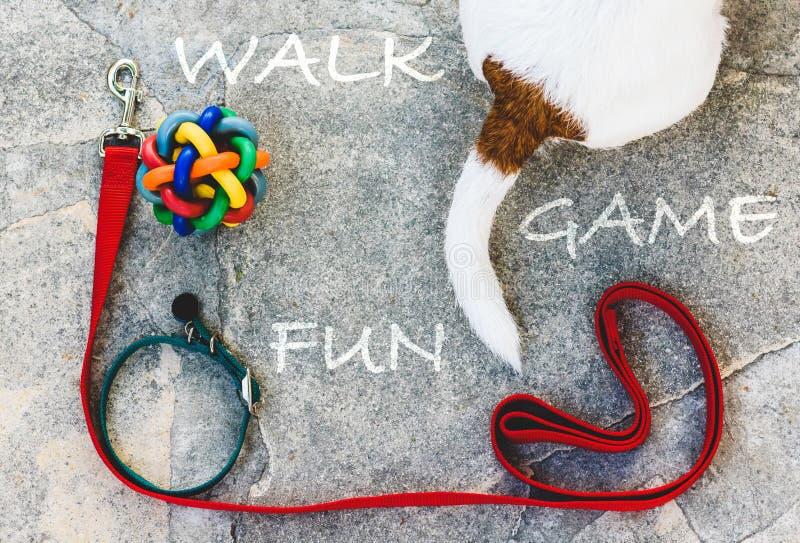 Passeggiata con un concetto del cane con gli accessori dei cagnolini layouted sul pavimento di pietra e sulla coda canina fotografia stock