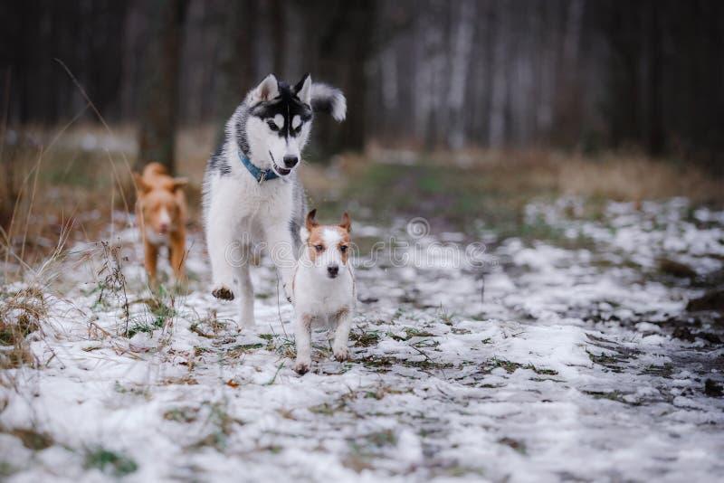 Passeggiata dei cani nel parco nell'inverno fotografia stock libera da diritti