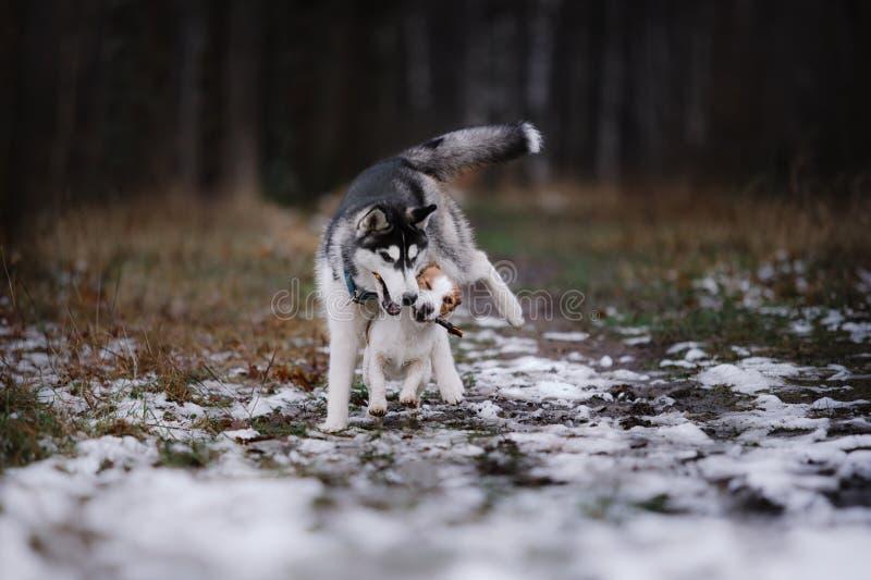 Passeggiata dei cani nel parco nell'inverno immagine stock libera da diritti