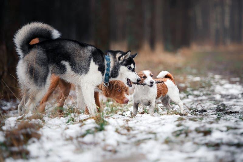 Passeggiata dei cani nel parco nell'inverno immagine stock