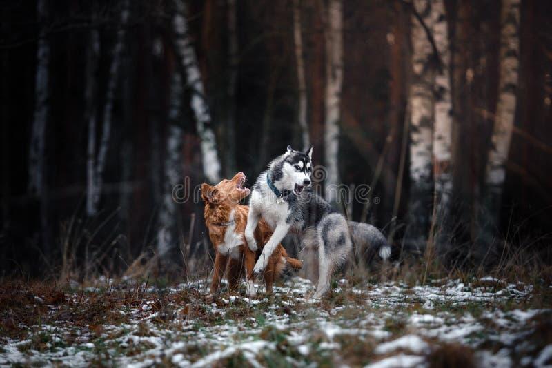 Passeggiata dei cani nel parco nell'inverno immagini stock