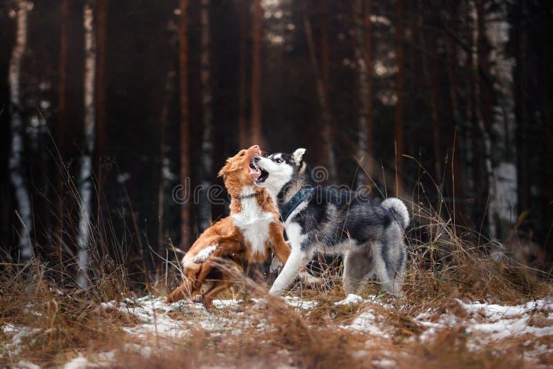 Passeggiata dei cani nel parco nell'inverno fotografie stock