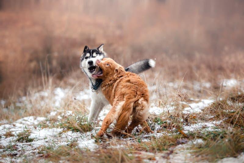 Passeggiata dei cani nel parco nell'inverno fotografia stock