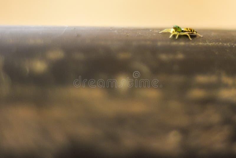 Passeggiata del ragno fotografie stock libere da diritti