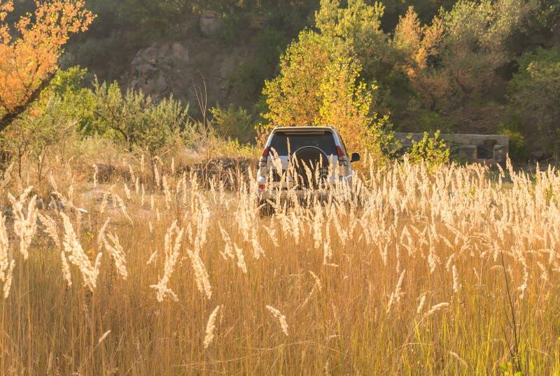 Passeggiata dell'automobile sul selvaggio fotografia stock libera da diritti