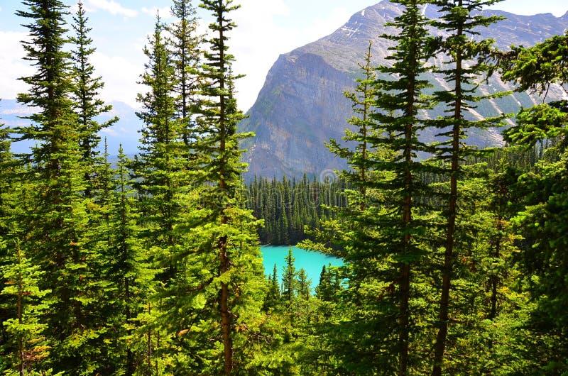 Passeggiata della casa da tè, Lake Louise, Alberta, Canada fotografia stock libera da diritti