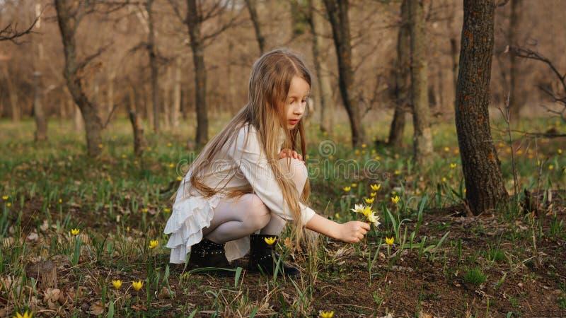 Passeggiata della primavera in foresta immagini stock