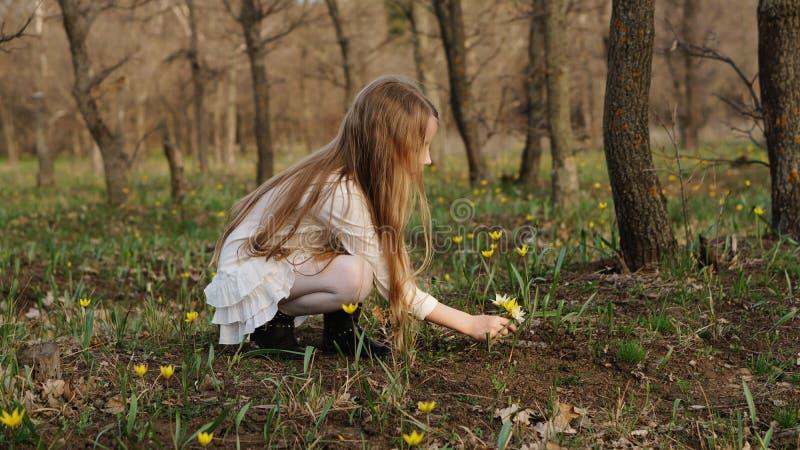 Passeggiata della primavera in foresta immagine stock