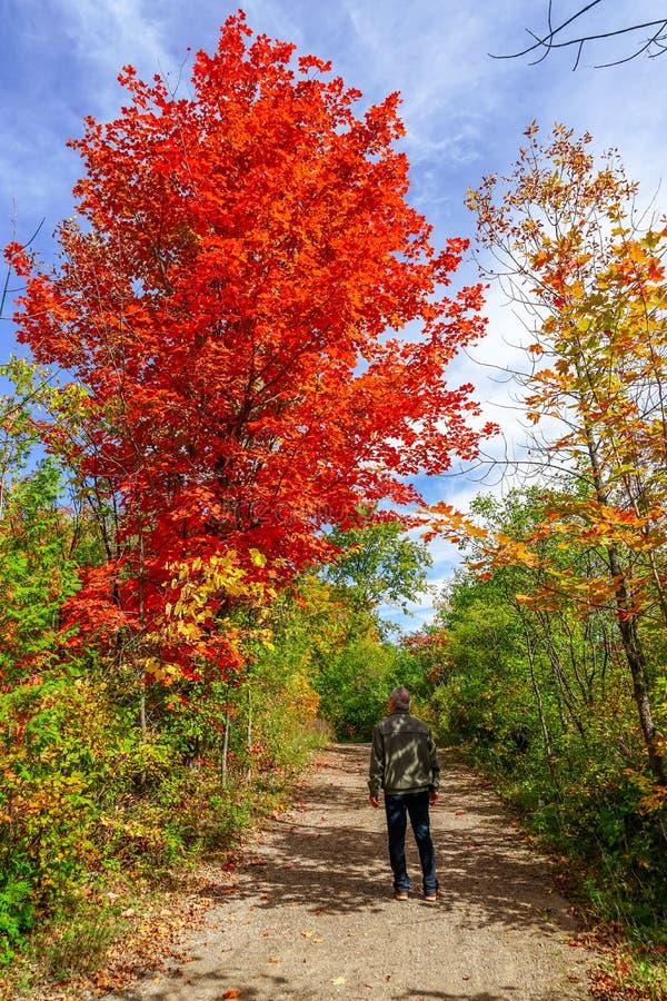 Passeggiata di caduta al parco dell'isola di Bizard a Montreal immagini stock libere da diritti