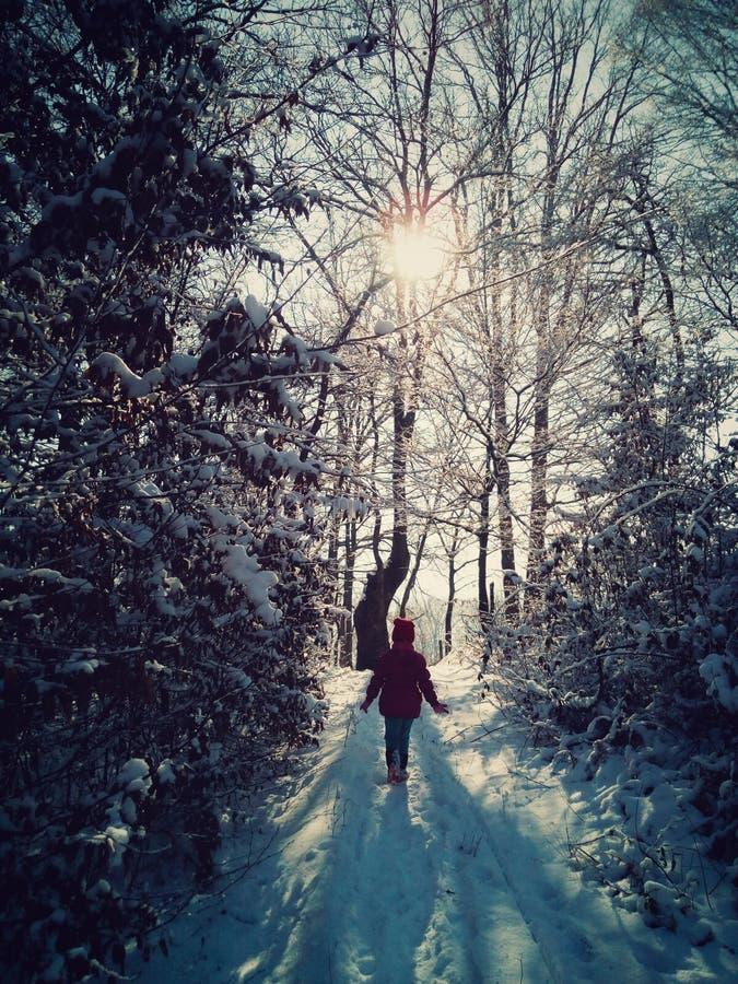 Passeggiata di inverno nella foresta immagini stock
