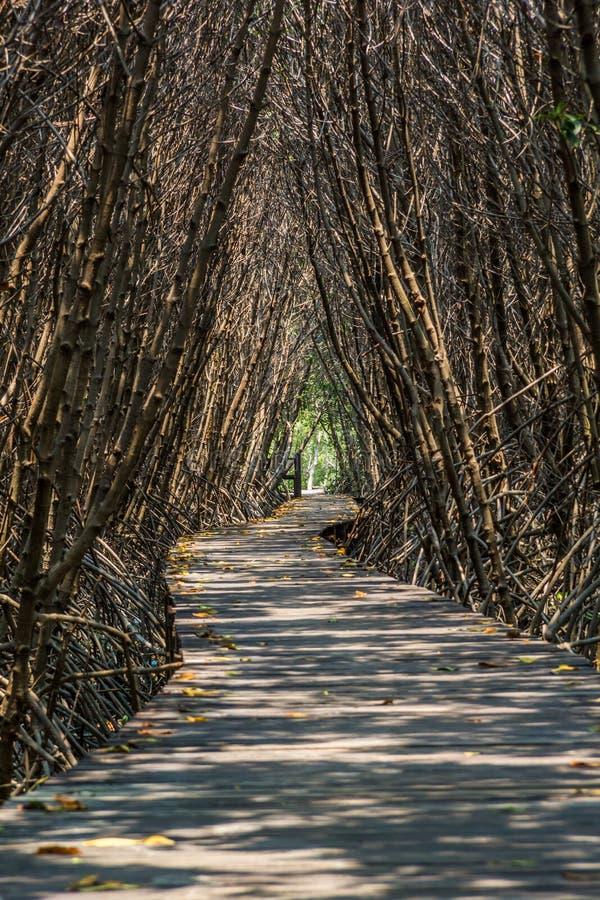 Passeggiata di legno del percorso alla foresta tropicale fotografia stock