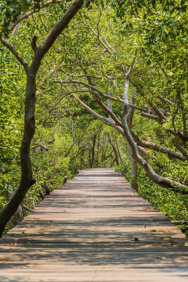 Passeggiata di legno del percorso alla foresta tropicale immagini stock