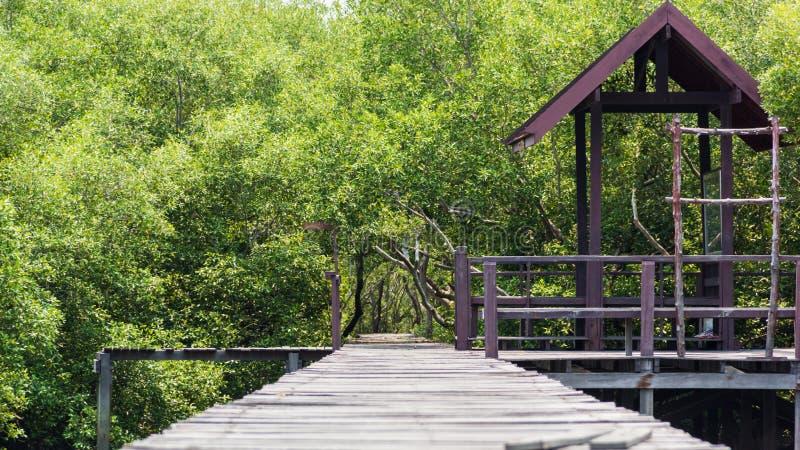 Passeggiata di legno del percorso alla foresta tropicale immagine stock libera da diritti