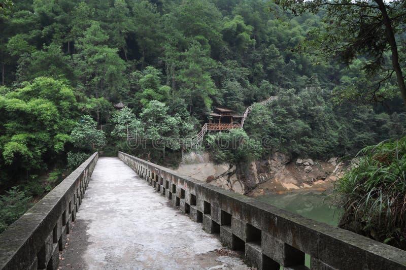 Passeggiata di legno della struttura in foresta immagine stock