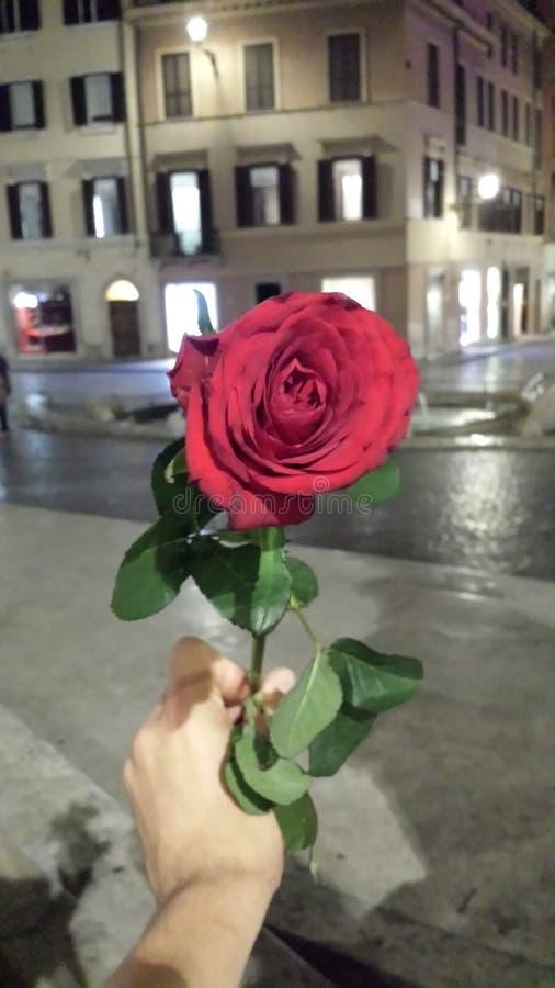 Passeggiata di notte di Roma della rosa rossa immagine stock