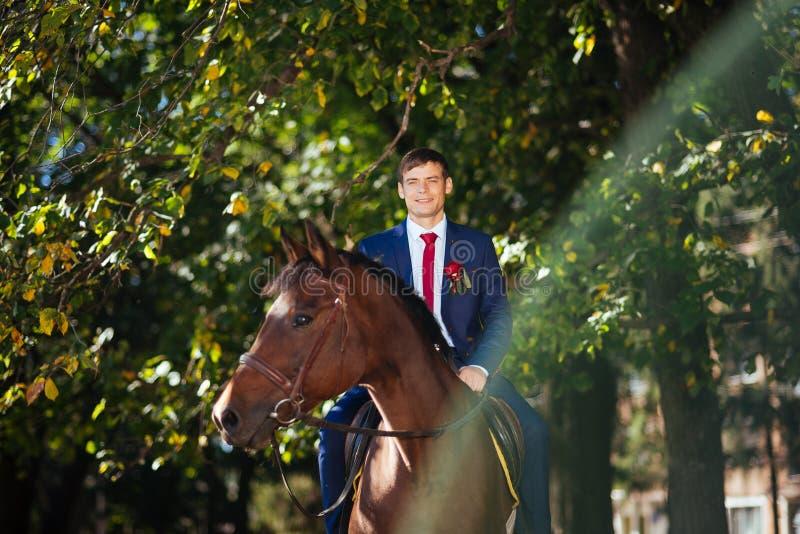 Passeggiata di nozze sulla natura con i cavalli immagini stock libere da diritti