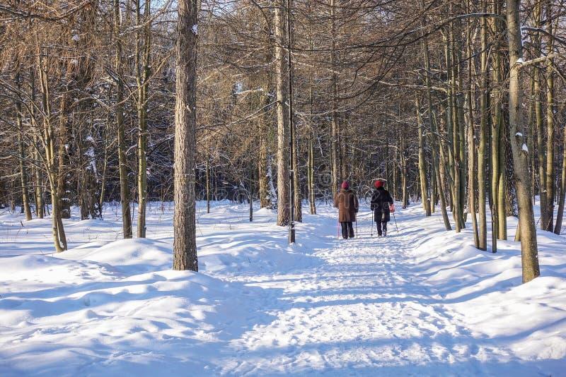 Passeggiata nella camminata nordica della foresta di inverno immagine stock