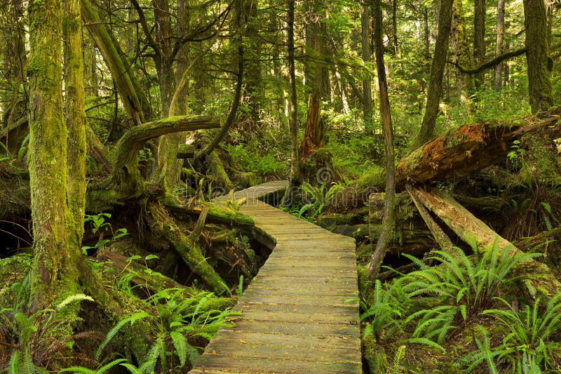 Passeio à beira mar através da floresta úmida luxúria, países da costa do Pacífico NP, Canadá fotos de stock