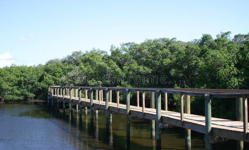 Passeio à beira mar através dos manguezais foto de stock