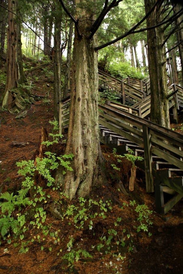 Passeio à beira mar de Ketchican através das madeiras do Hemlock fotos de stock royalty free
