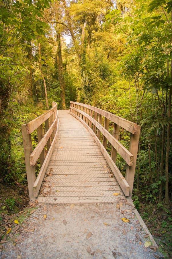 Passeio à beira mar de madeira na floresta tropical, Nova Zelândia fotos de stock royalty free