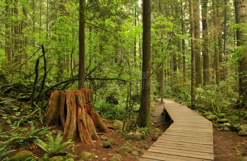 Passeio à beira mar na floresta do vale de lynn foto de stock royalty free