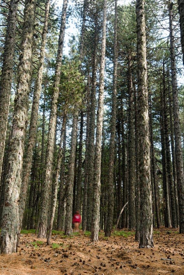 Passeio adolescente na floresta fotos de stock royalty free