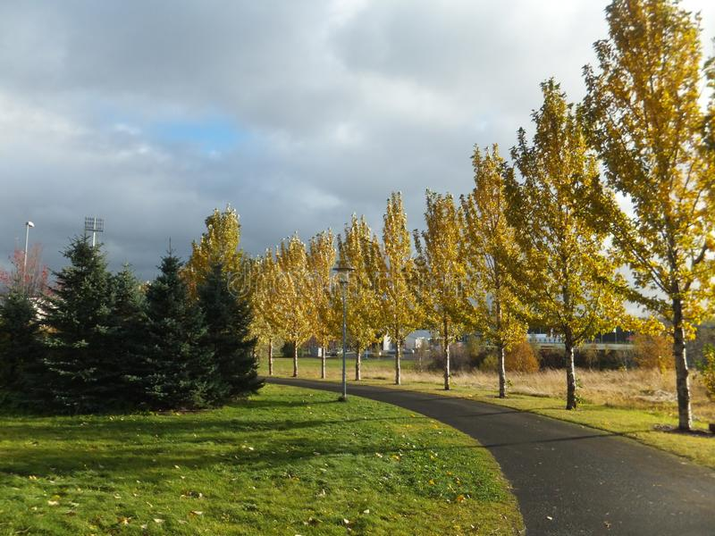 Passeio alinhado com as árvores de vidoeiro no outono fotos de stock