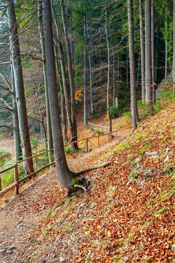 Passeio atrav?s da floresta do outono no outono atrasado imagem de stock