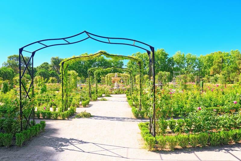 Passeio através do parque de Buen Retiro Rose Park fotografia de stock royalty free