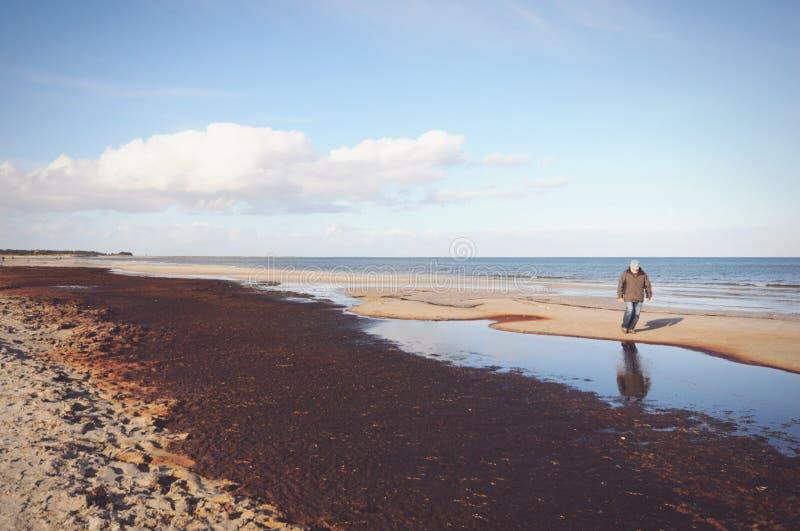 Passeio através do parque nacional da área ocidental da lagoa de Pomerania foto de stock royalty free