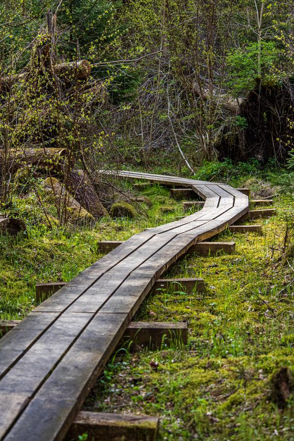 passeio bonito c?nico da fuga do turista na floresta verde imagens de stock royalty free