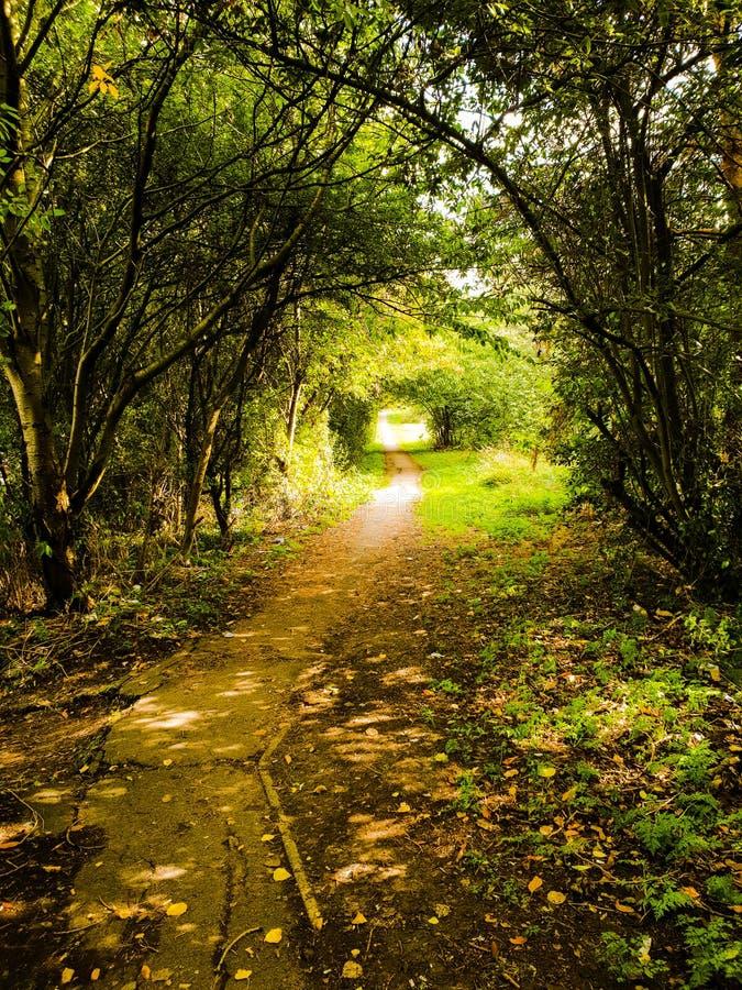 Passeio bonito durante o outono que conduz a um parque, Londres, Reino Unido fotos de stock