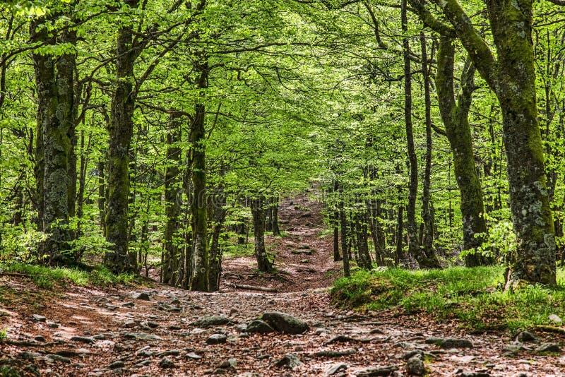 Passeio em uma floresta verde bonita fotografia de stock
