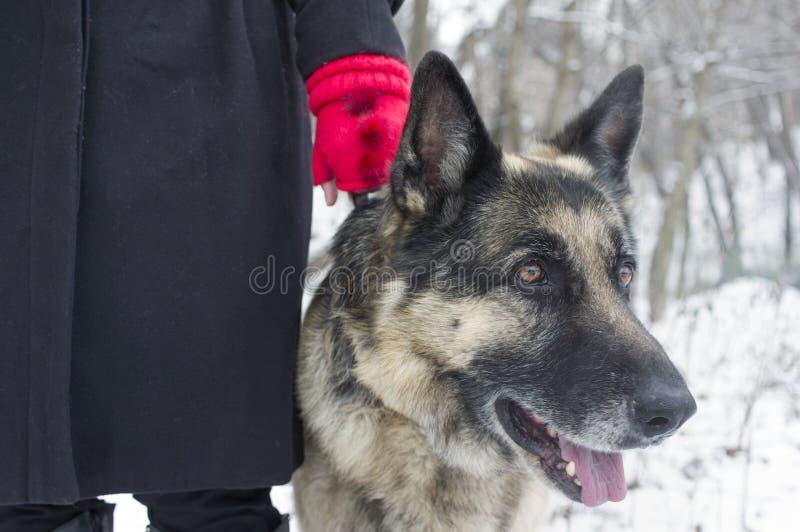 Passeio com um cão foto de stock royalty free