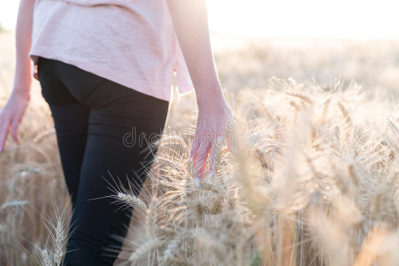 Passeio da mulher e orelhas tocantes do trigo, efeito da luz solar imagens de stock royalty free