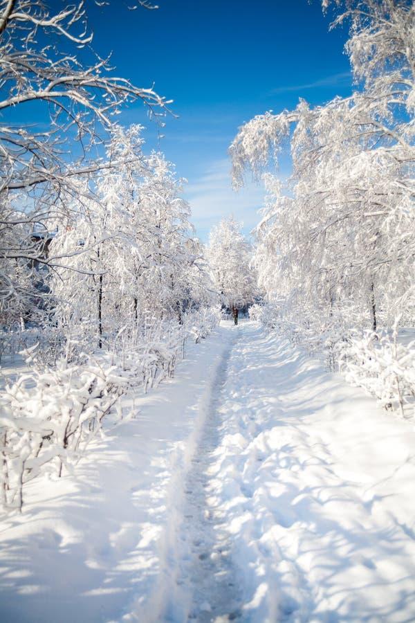 Passeio da neve imagem de stock