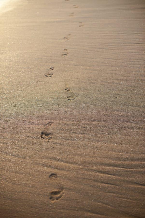 Passeio de cópias do pé na areia da praia imagem de stock