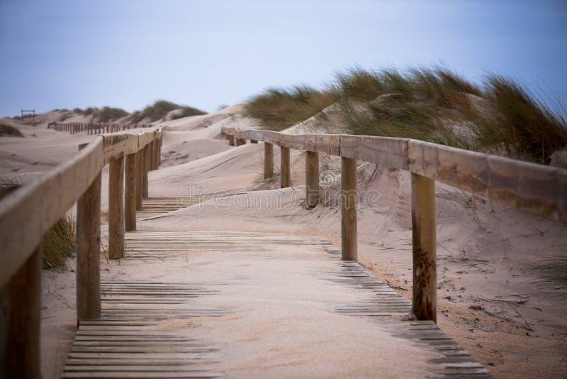 Passeio de madeira através das dunas na praia do oceano foto de stock