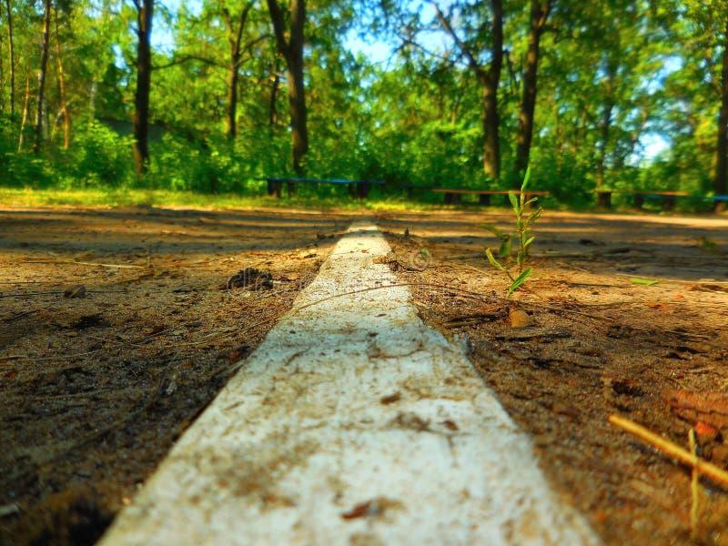 Passeio de madeira na floresta do carvalho fotos de stock