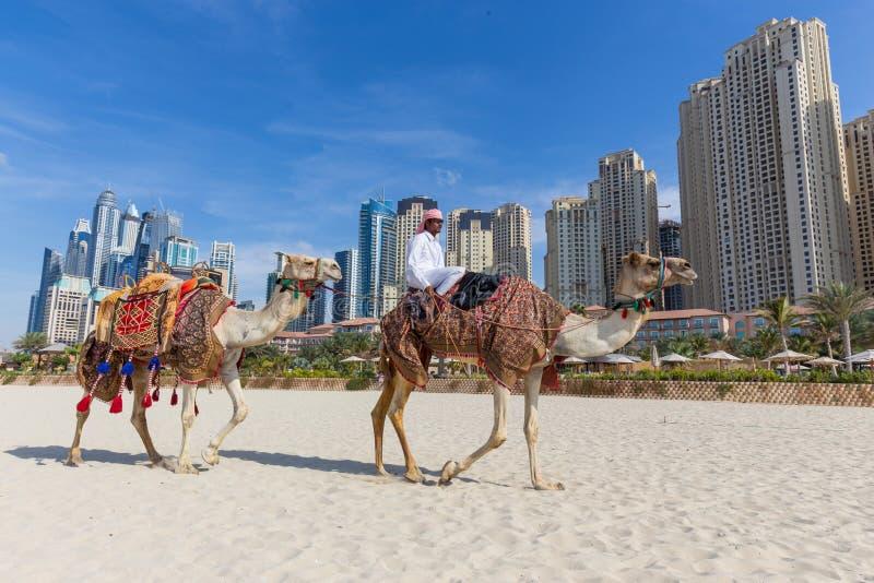 Passeio de oferecimento do camelo do homem na praia de Jumeirah, Dubai, Emiratos Árabes Unidos foto de stock royalty free
