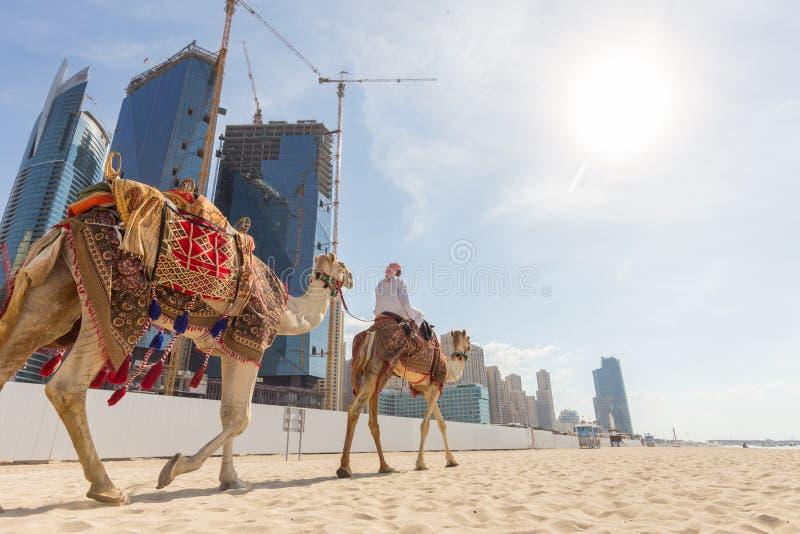 Passeio de oferecimento do camelo do homem na praia de Jumeirah, Dubai, Emiratos Árabes Unidos imagens de stock