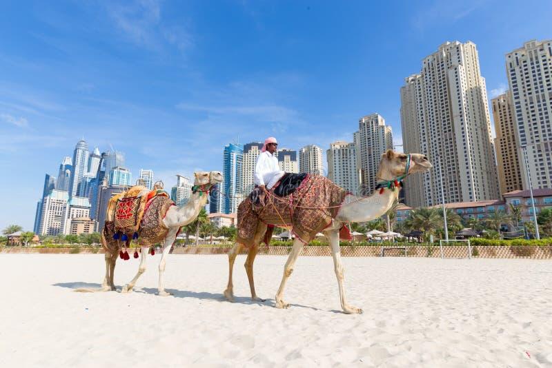 Passeio de oferecimento do camelo do homem na praia de Jumeirah, Dubai, Emiratos Árabes Unidos fotos de stock royalty free