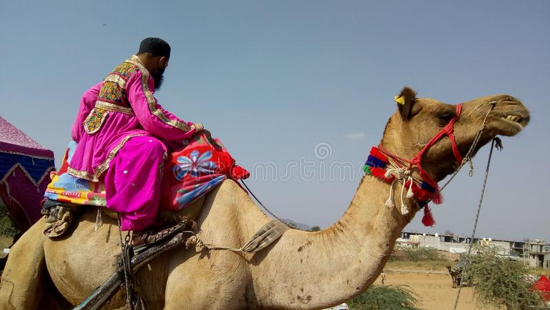 Passeio do camelo fotos de stock royalty free