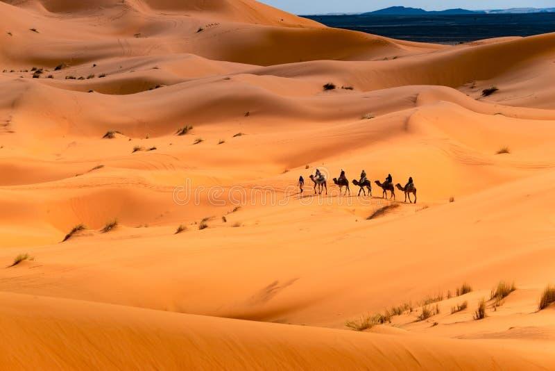 Passeio do camelo através do deserto imagens de stock
