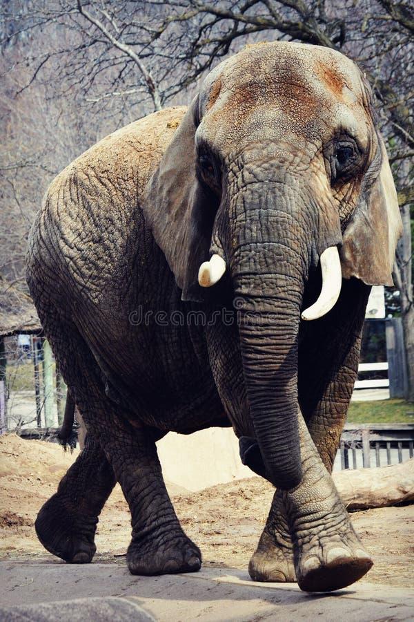 Passeio do elefante fotos de stock