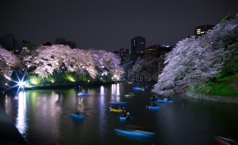 Passeio do Riverboat sob as flores de cerejeira imagens de stock royalty free