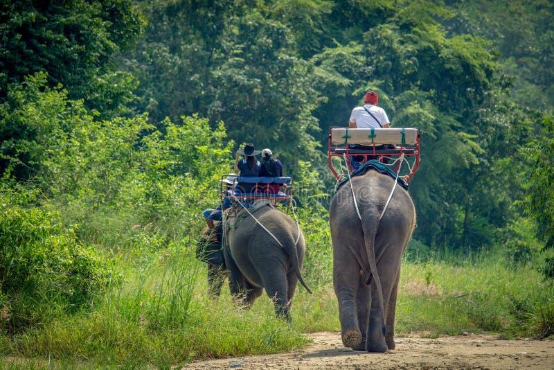 Passeio do turista o elefante da aventura que trekking através da selva imagem de stock