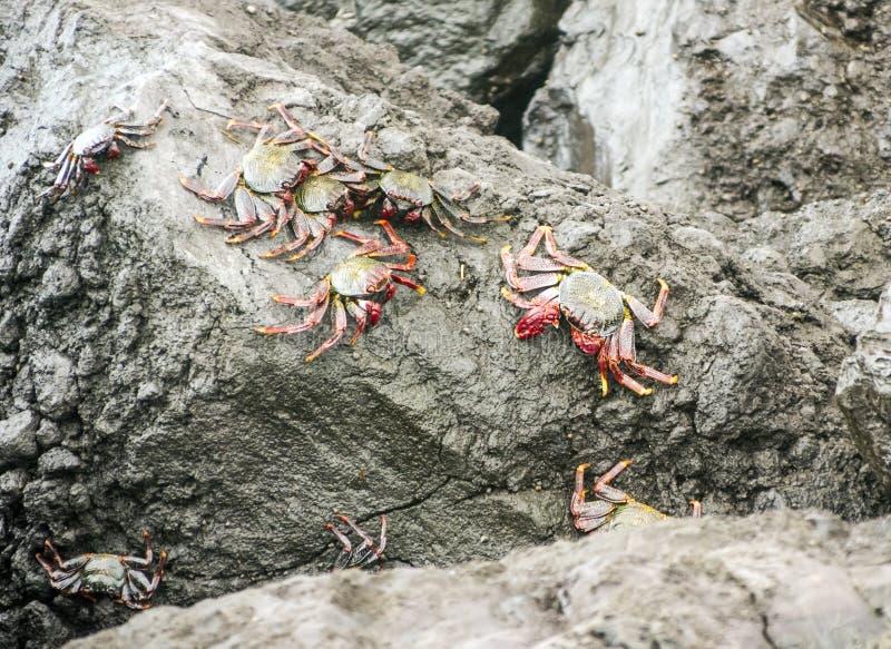 Passeio dos caranguejos imagens de stock royalty free