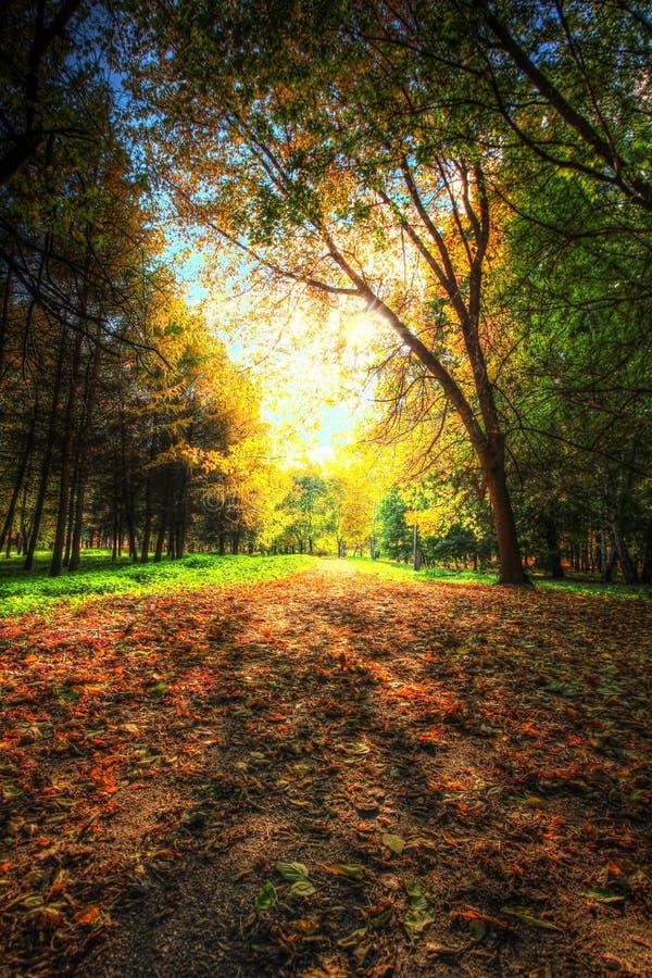 Passeio em um parque pitoresco do outono do outono fotos de stock royalty free